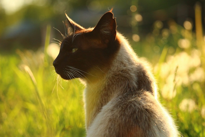 cat-2332451_1280.jpg