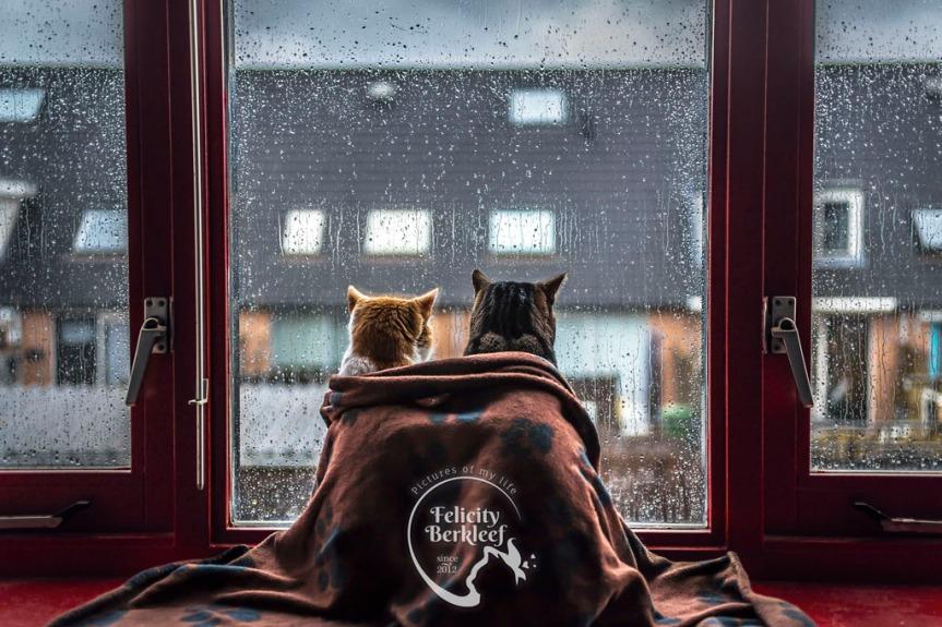 Caturday chat with photographer FelicityBerkleef