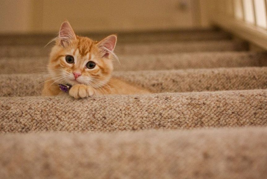 8 tips to live safely withcats
